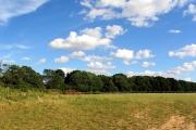 Farmland near Ashford Hill