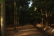 Telegraph Woods, Southampton