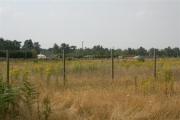 Fields of Ragwort