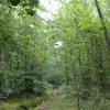 Britty Wood