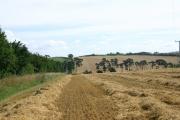 Suffolk farmland