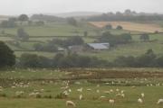 Pasture, Bryn Bras