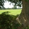 Farmland, east of  Bransgore