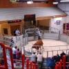 Dingwall Auction Market