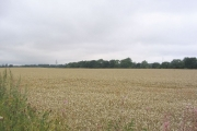Corn Field and  Coroners Woods