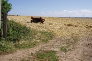 Field by Rose-an-Grouse farm