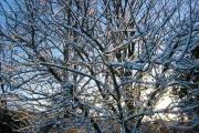 Morning  sun on snow at Kelsall
