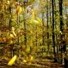 Autumn at Brierley