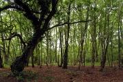 Woodland near Newtown
