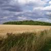 Hardwick Wood