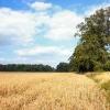 Farmland near Cavenham