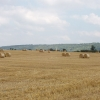 Kingston Stert - harvested cornfield
