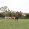 Sydenham Grange Farm