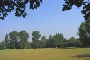 Parklands Wood, Upminster, Essex