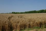 Farmland near Gazeley