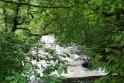 River Avich