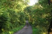 Woods beside Fearneach Bay