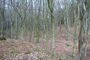 Ernocroft Wood