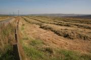 Drying straw, Burnt Edge Lane