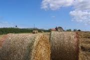 Bonfield Farm