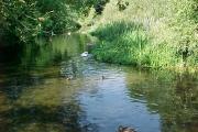 The Splash, River Ash, Shepperton