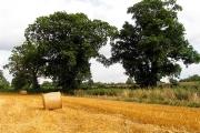Field near Acton Turville