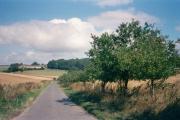 Apple trees on Hatching Lane