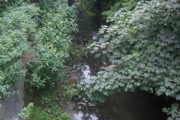 River Connswater, Belfast