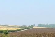 The Lane to Rayham