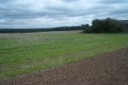 Field of stubble