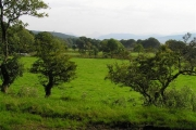 Fields and trees at Drimnin