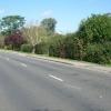 Effingham Common Road
