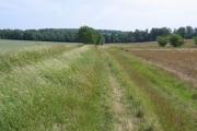 Farmland at Wimpole, Cambs