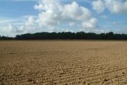 Henley Wood, CR6