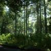 Copse Wood - A broadleaved woodland