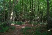 West Wood, Wivelsfield Green