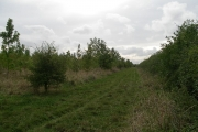 Community woodland at Denchworth.