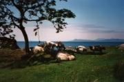 Smirisary, near Glenuig