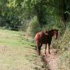 Bicknoller: horse in field