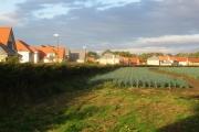 Aberlady encroaches on an onion field.