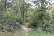 Bayhurst Wood