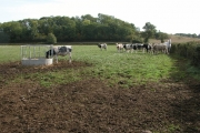 Cattle and a horse in a field opposite Morse's Farm, Tibberton