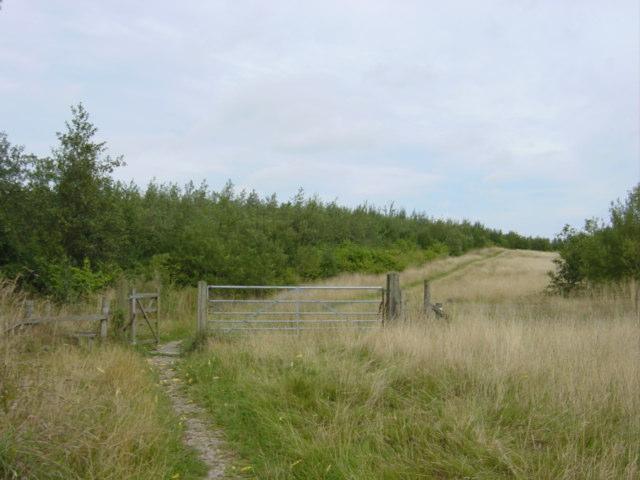 Path through Gresley Wood