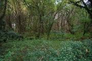 Godley's Green