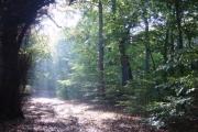Autumn sunshine in Childwall Woods