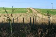 Farmland in the Leckhampstead area