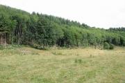 Yeld Wood