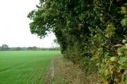 The Edge of Meepsehole Wood