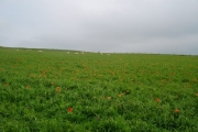 Field near West Stove farm
