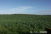 Farm field adjacent to Lisle Court, Lymington, Hants